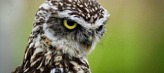 Ornitofobia: fobia a las aves