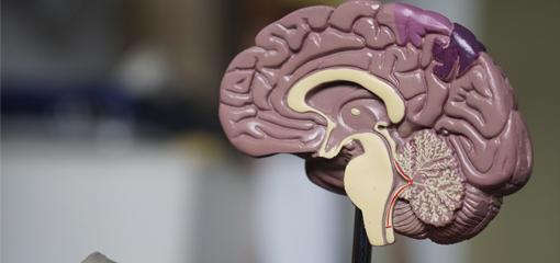 ¿Qué es el cerebro social?